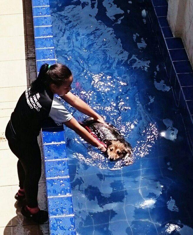 Aula de Natação Canina em Higienópolis - Centro de Natação para Cachorro