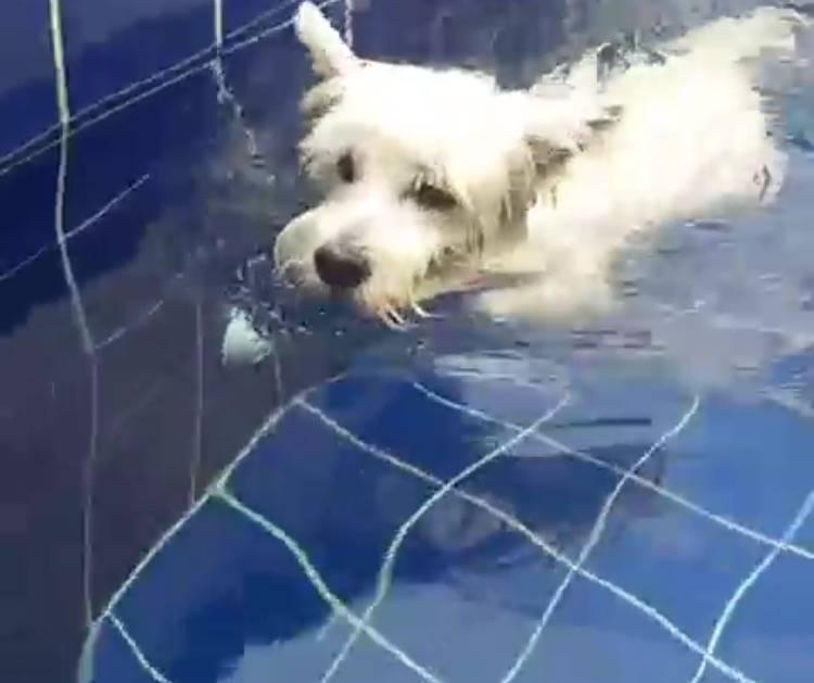 Aula de Natação para Cães em São Lourenço da Serra - Centro de Natação para Cachorro