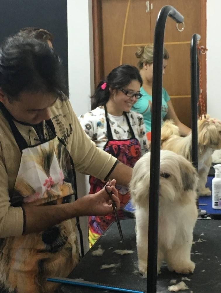 Aulas de Banho e Tosa Preço em Higienópolis - Curso de Banho e Tosa Animal