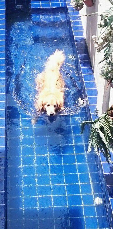 Aulas de Natação para Cães no Pacaembu - Centro de Natação para Cachorro