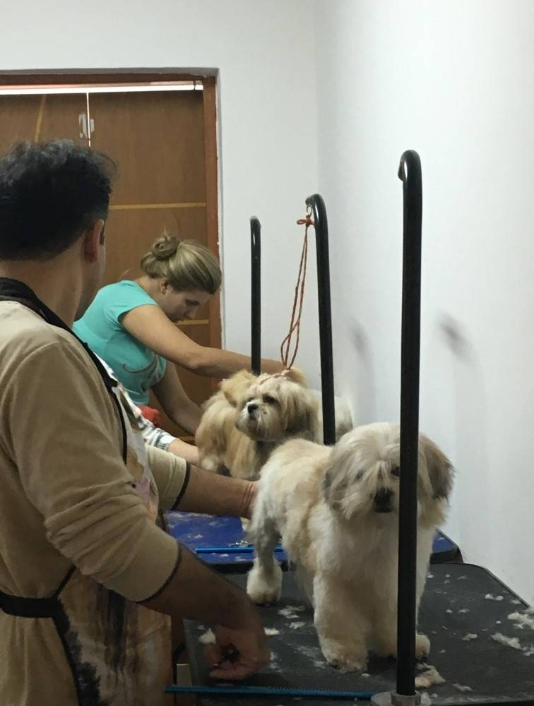 Aulas Praticas de Banho e Tosa em Sapopemba - Cursos de Banho e Tosa na Vila Mariana