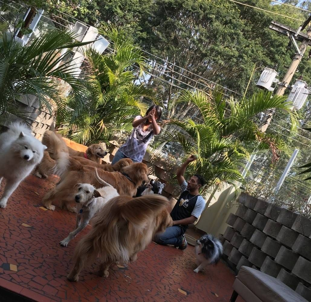 Centro Clínico de Fisioterapia Canina Preço no Grajau - Fisioterapia e Reabilitação Canina
