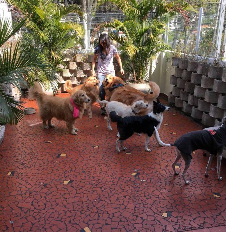 Centro Clínico de Fisioterapia Canina na Vila Esperança - Fisioterapia Canina em São Paulo