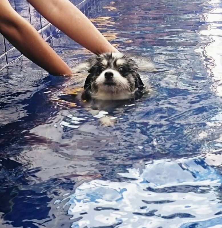Centro de Fisioterapia para Cães na Água Funda - Tratamento de Fisioterapia Canina