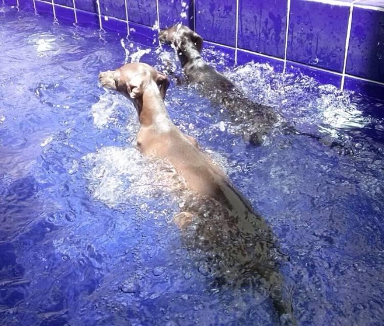 Centro de Natação para Cachorro Preço na Vila Formosa - Centro de Natação para Cachorro