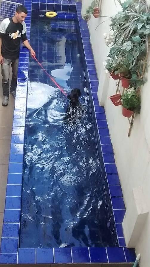 Centro de Natação para Cães em Itaquaquecetuba - Centro de Natação para Cachorro