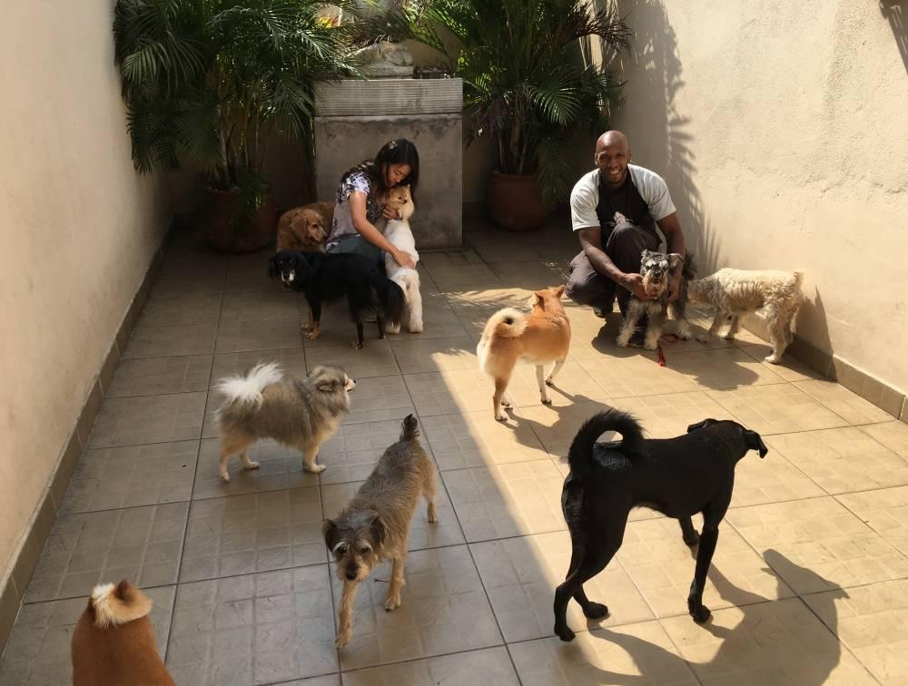 Centro de Reabilitação com  Fisioterapia Canina na Cidade Patriarca - Serviços de Fisioterapia Canina