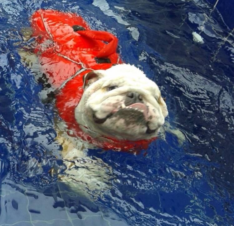 Clínica de Fisioterapia para Cachorro na Vila Maria - Fisioterapia Canina em Sp