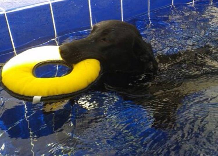 Clínica de Fisioterapia para Cachorros no Parque do Carmo - Centro de Fisioterapia para Cães