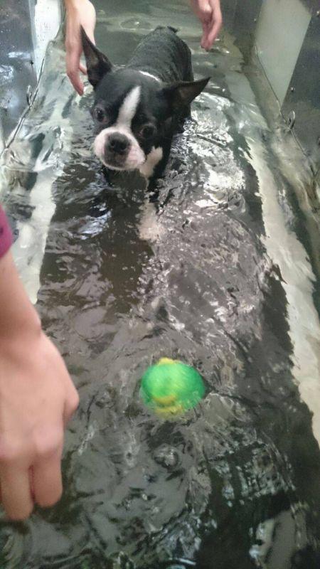 Clínica de Fisioterapia para Cães no Jardim São Paulo - Fisioterapia Canina em Sp
