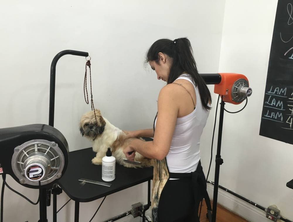 Curso de Banho e Tosa para Animais no Brás - Cursos de Banho e Tosa em Sp