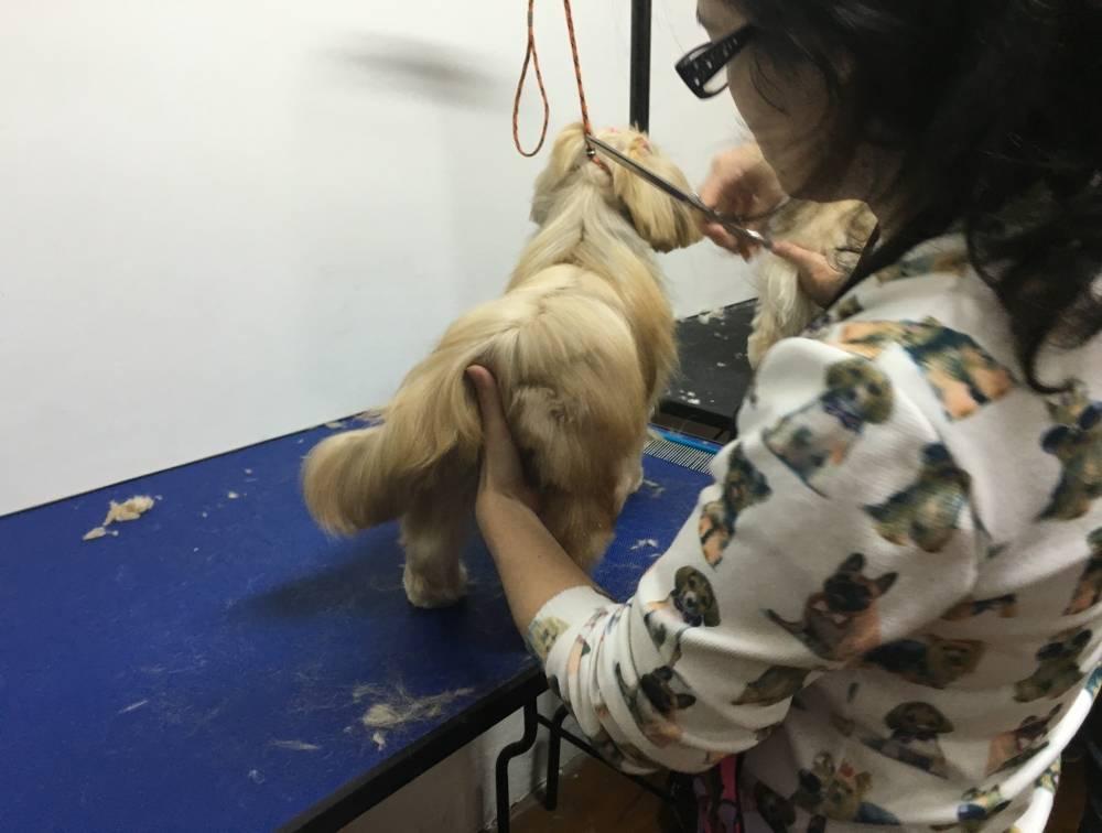 Curso Especialista em Banho e Tosa Preço na Cidade Dutra - Curso de Banho e Tosa Animal