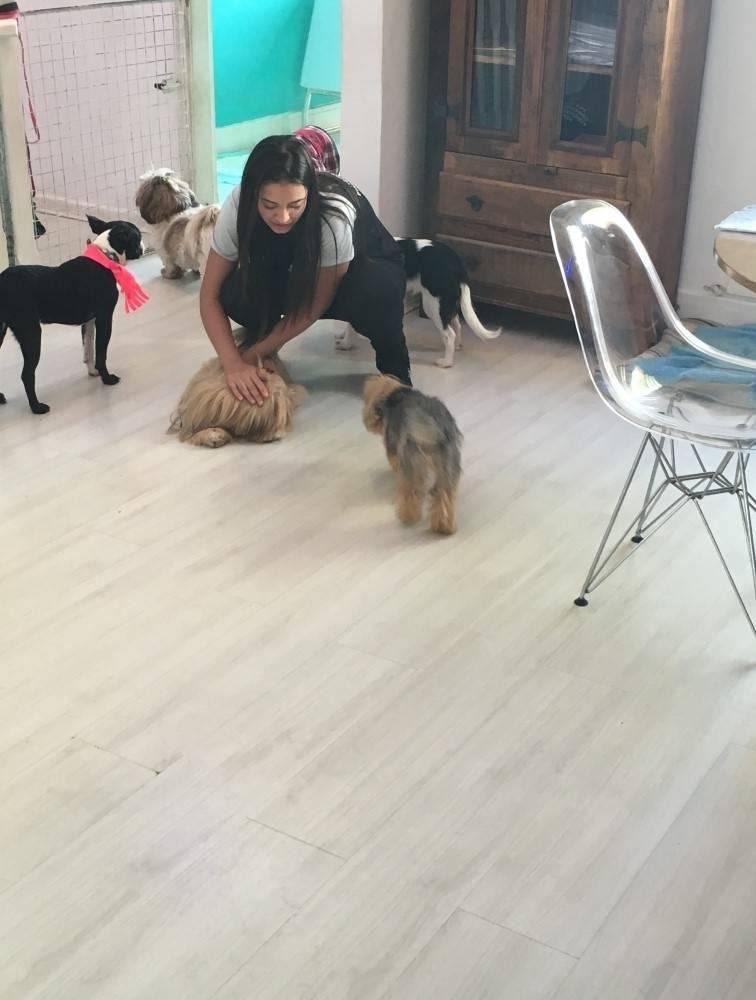Cursos de Adestramento para Cachorros no Jaguaré - Adestramento para Cachorro em São Paulo