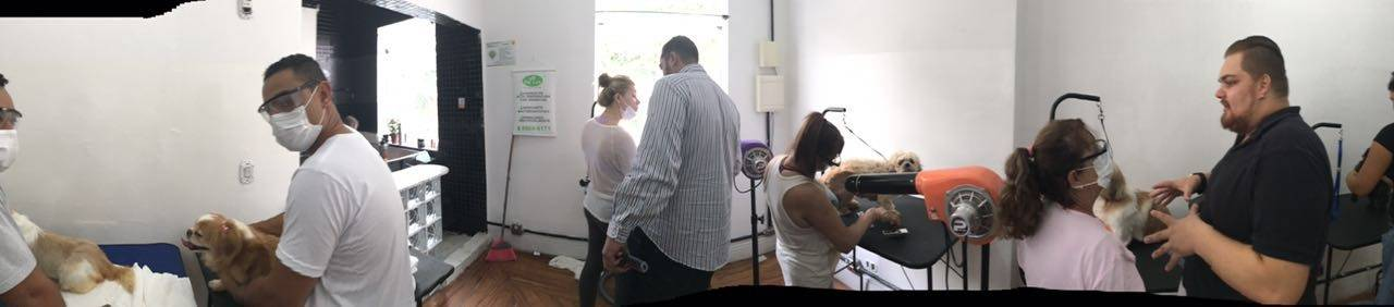 Cursos para Banho e Tosa de Cachorros no Butantã - Cursos de Banho e Tosa em São Paulo