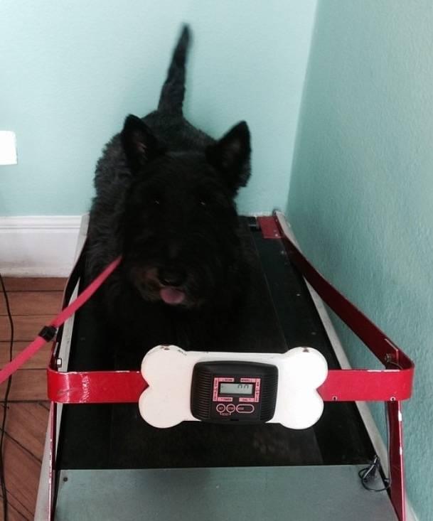 Empresa de Fisioterapia Canina na Cidade Ademar - Fisioterapia para Cães
