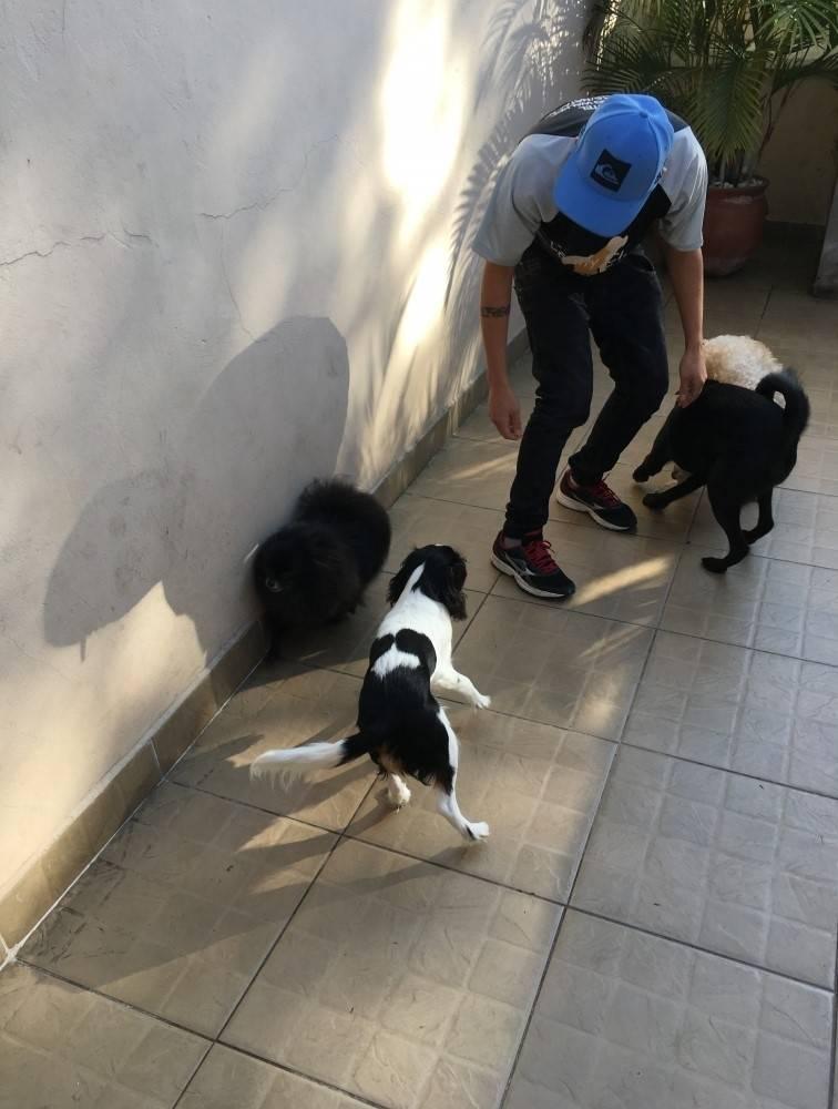 Empresa Especializada em Adestramento de Cachorro em Mauá - Adestramento para Cachorro em São Paulo