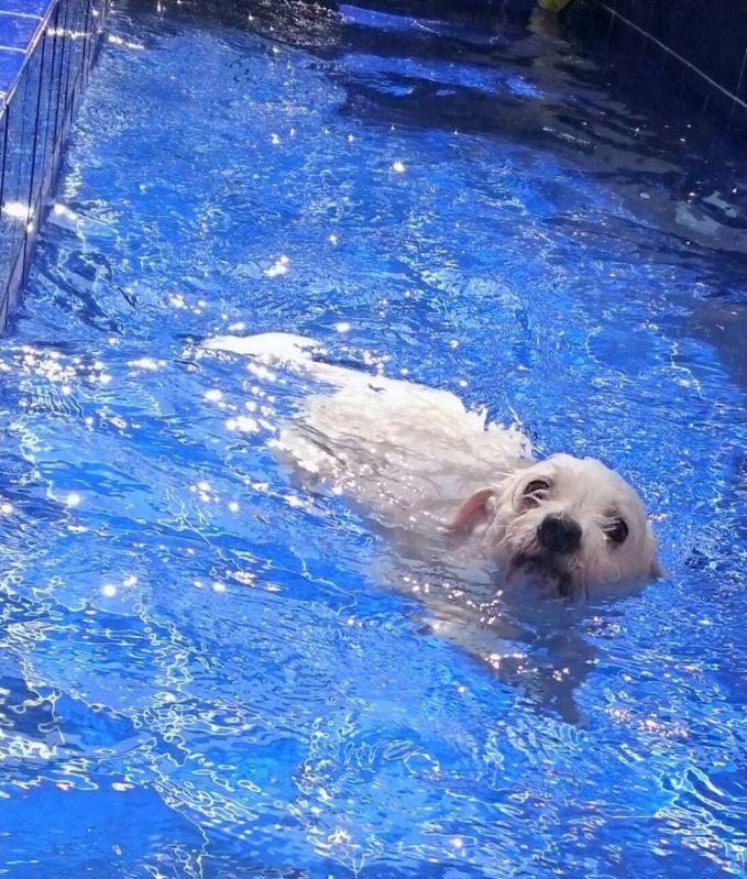 Escola de Natação para Cachorro no Rio Pequeno - Centro de Natação para Cachorro