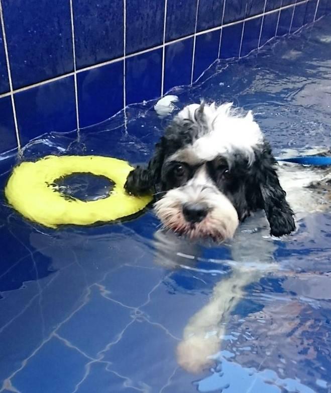 Espaços de Natação Canica na República - Centro de Natação para Cachorro