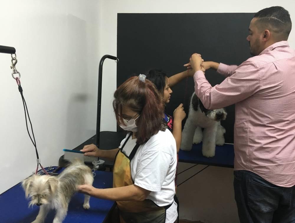Especialização em Estética Pet na Casa Verde - Cursos de Banho e Tosa em Sp