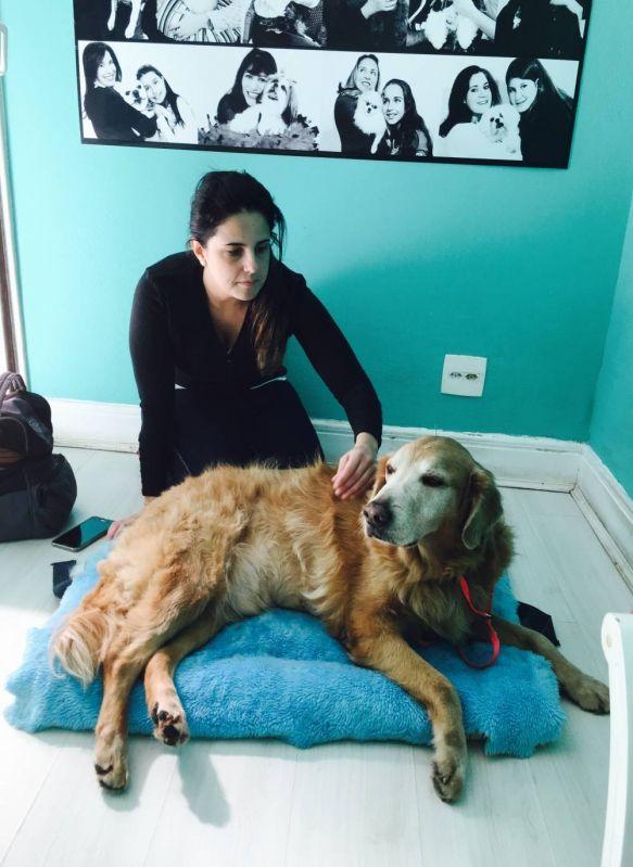 Exercícios de Fisioterapia para Cães em São Domingos - Centro Clínico de Fisioterapia Canina