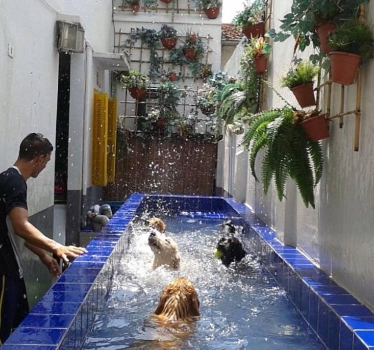 Exercícios de Natação para Cachorro no Alto da Lapa - Centro de Natação para Cachorro