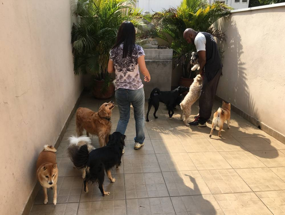 Fisioterapia Animal Preço no Jardim Paulista - Fisioterapia Canina em Sp