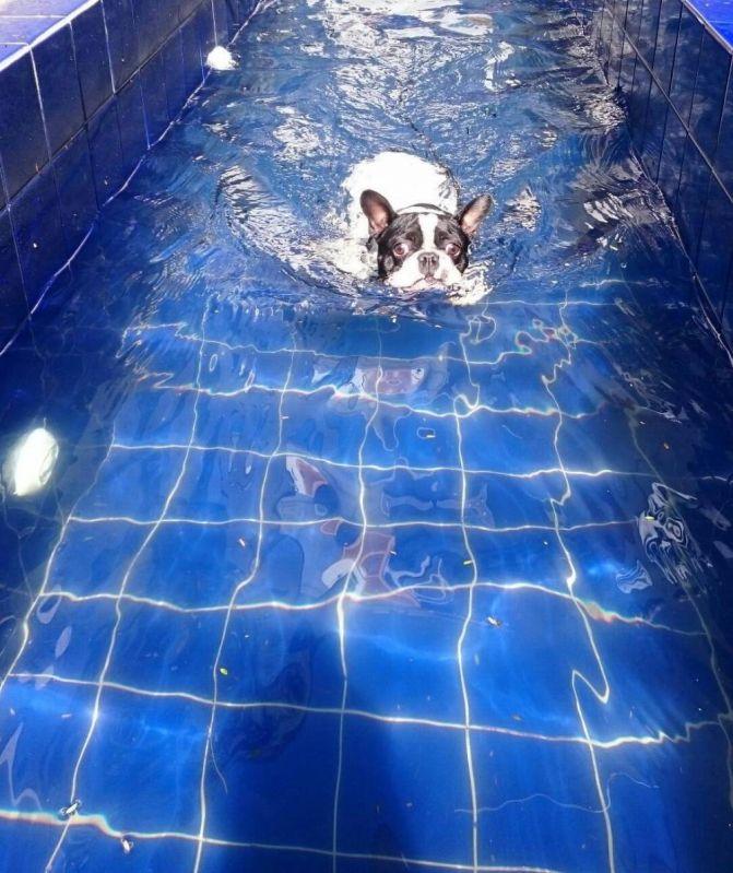 Fisioterapia Canina em São Paulo Preço no Campo Grande - Fisioterapia para Cães