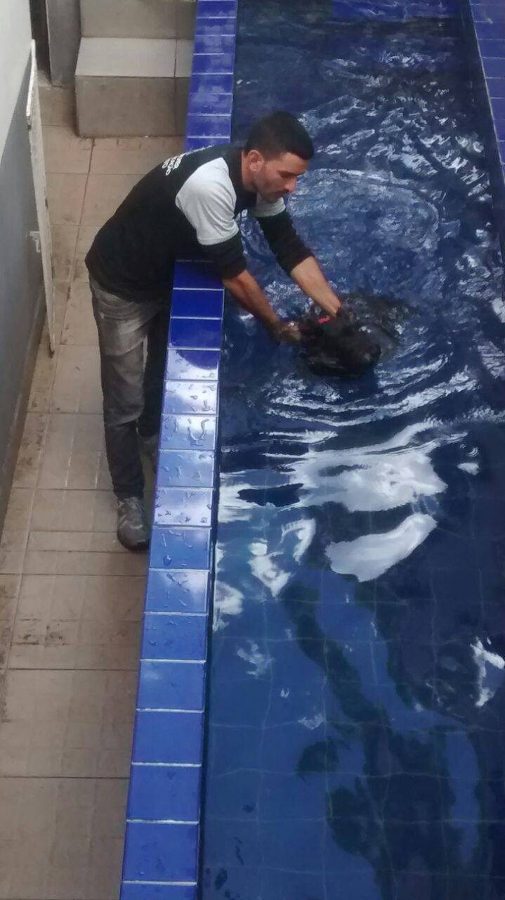 Fisioterapia Canina em Sp no Jardim Paulistano - Centro Clínico de Fisioterapia Canina