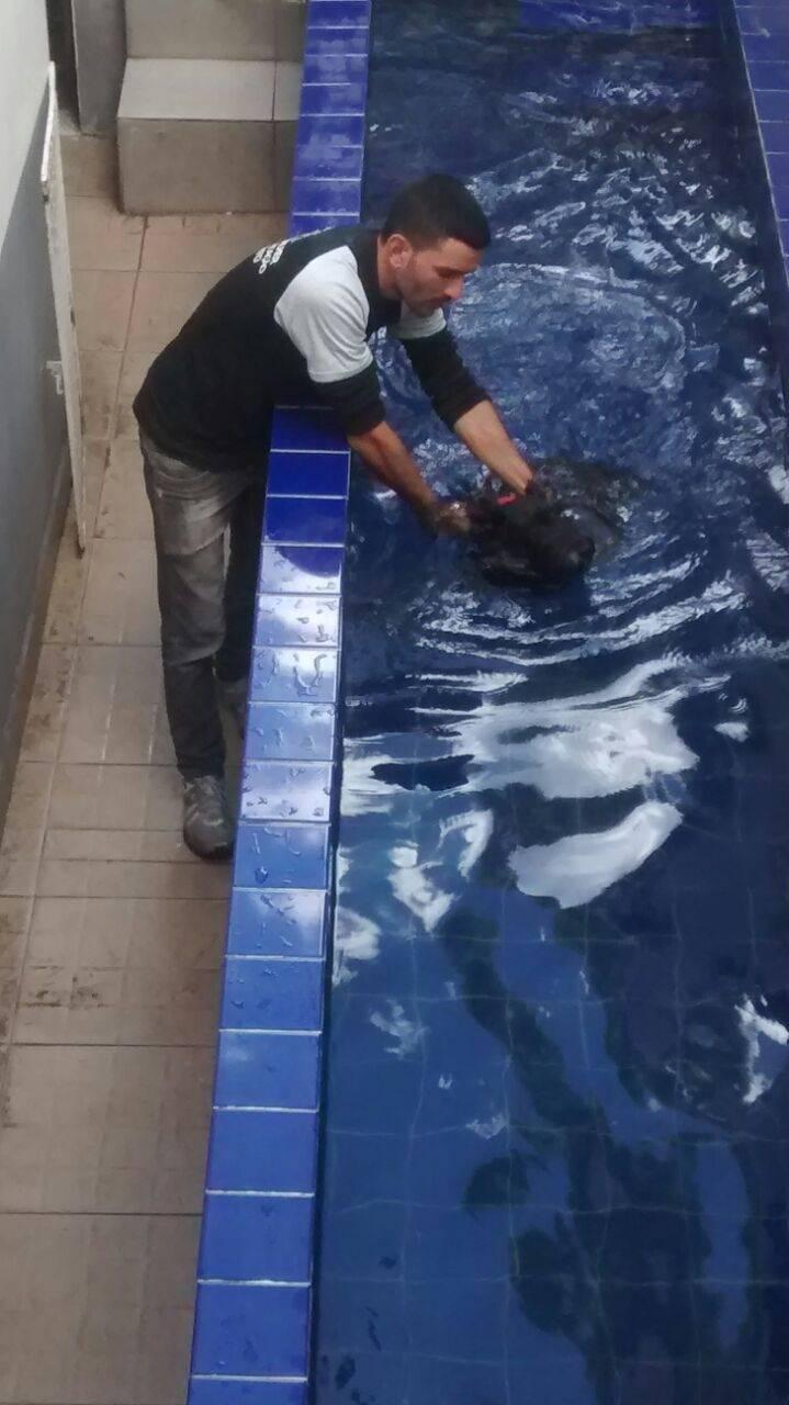 Fisioterapia Canina em Sp na Cidade Patriarca - Tratamento de Fisioterapia Canina