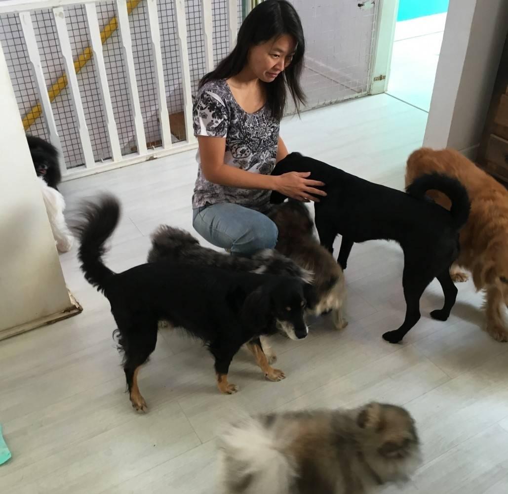 Fisioterapia e Acupuntura Canina em Guianazes - Centro Clínico de Fisioterapia Canina
