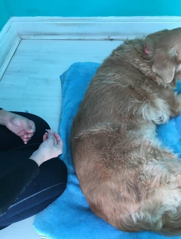 Fisioterapia e Hidroterapia para Cães em Diadema - Centro Clínico de Fisioterapia Canina