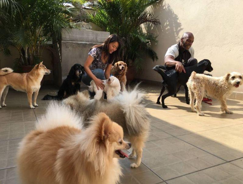 Fisioterapia e Reabilitação Canina na Água Funda - Fisioterapia e Reabilitação Canina