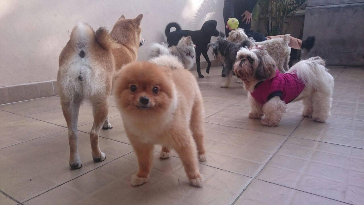 Fisioterapia Especializada em Cachorros na Vila Leopoldina - Serviços de Fisioterapia Canina