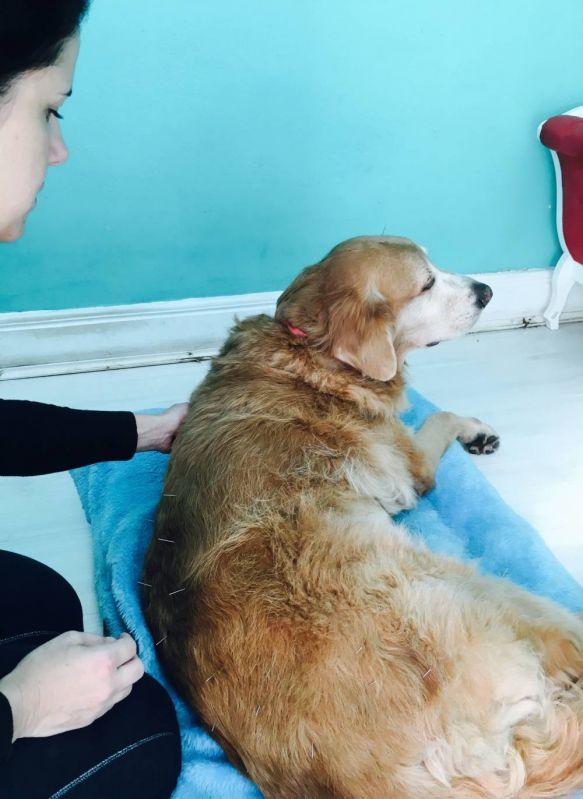 Fisioterapia para Cachorros Preço no Cambuci - Serviços de Fisioterapia Canina