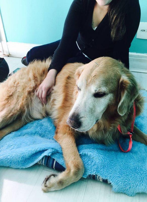 Fisioterapia para Cães no Tremembé - Fisioterapia Canina em Sp