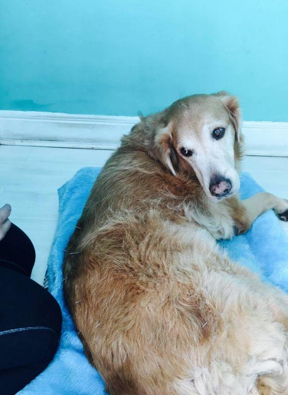 Fisioterapia Veterinária para Cães em Belém - Clínica de Fisioterapia Canina