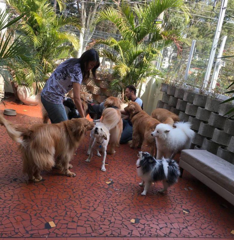 Fisioterapia Veterinária para Pet no Pacaembu - Clínica de Fisioterapia Canina