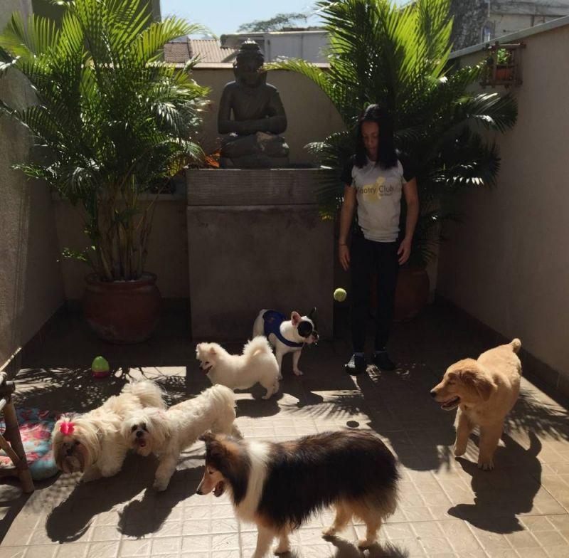 Hotel para Cachorro em São Paulo em Sumaré - Hotel para Cachorro na Vila Mariana