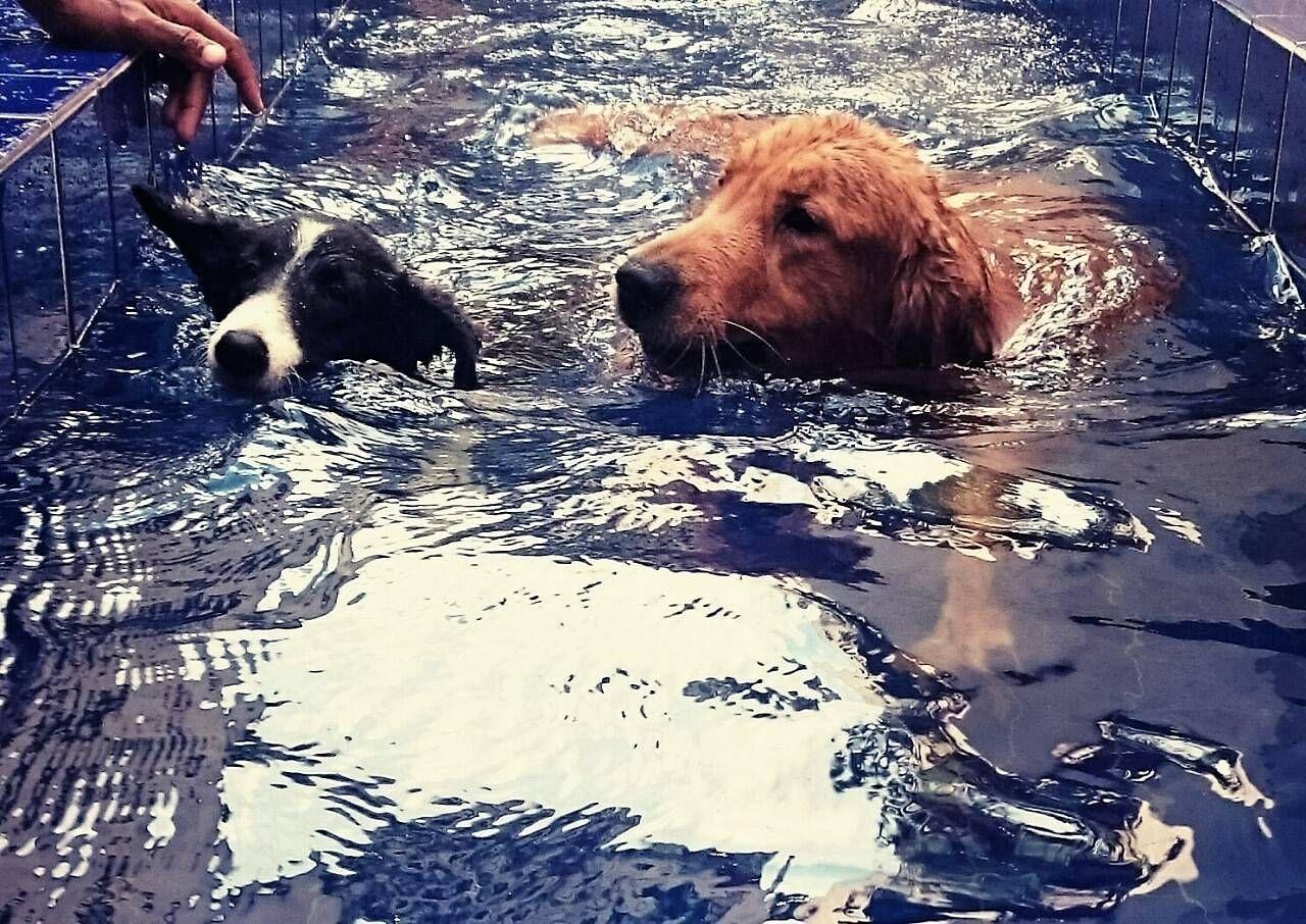 Natação Canina no Jardim Ângela - Centro de Natação para Cachorro