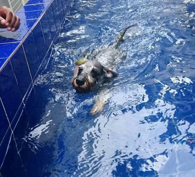 Natação de Cachorro no Rio Pequeno - Centro de Natação para Cachorro