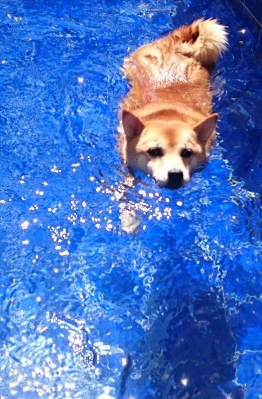 Natação e Spa para Cachorro no Jaguaré - Centro de Natação para Cachorro