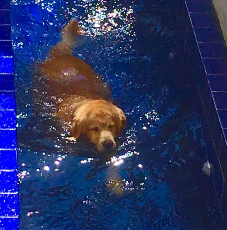 Natação e Spa para Cães no Jardim América - Centro de Natação para Cachorro