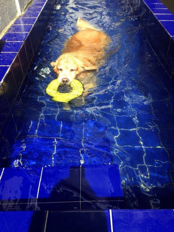 Natação para Cachorro em São Paulo no Jabaquara - Centro de Natação para Cachorro