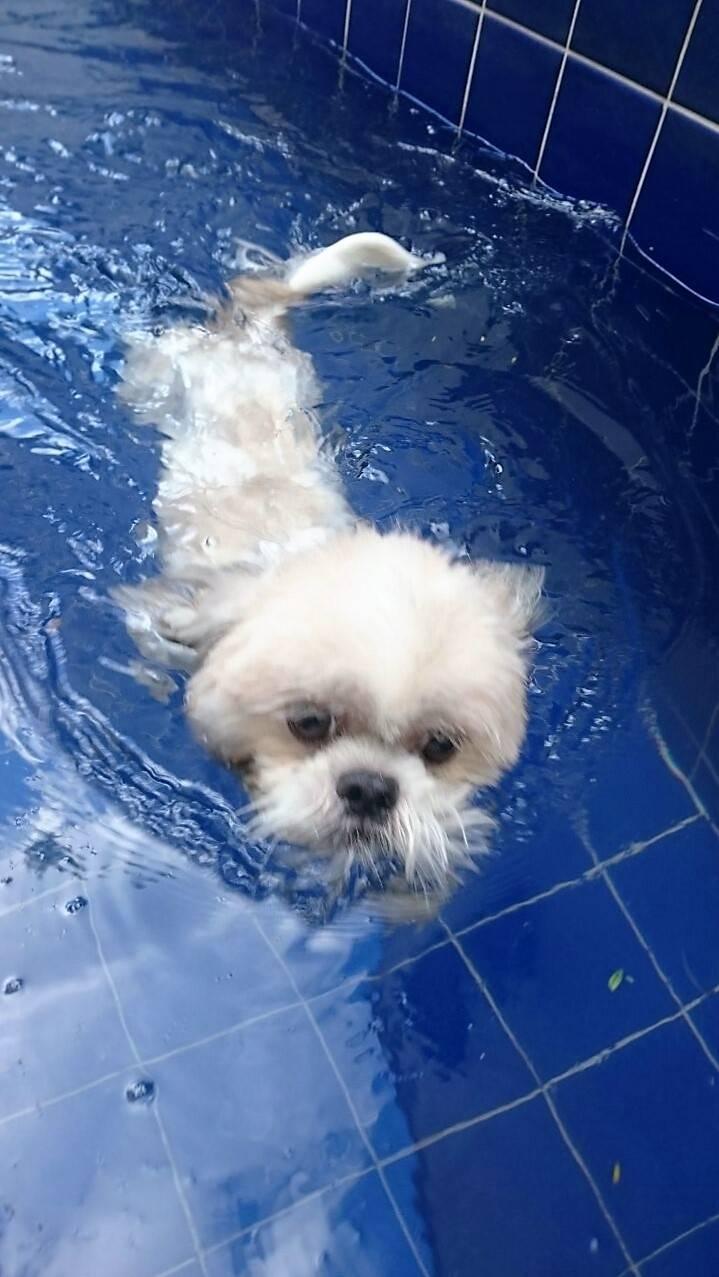 Natação para Cachorro em Sp Preço em Diadema - Centro de Natação para Cachorro