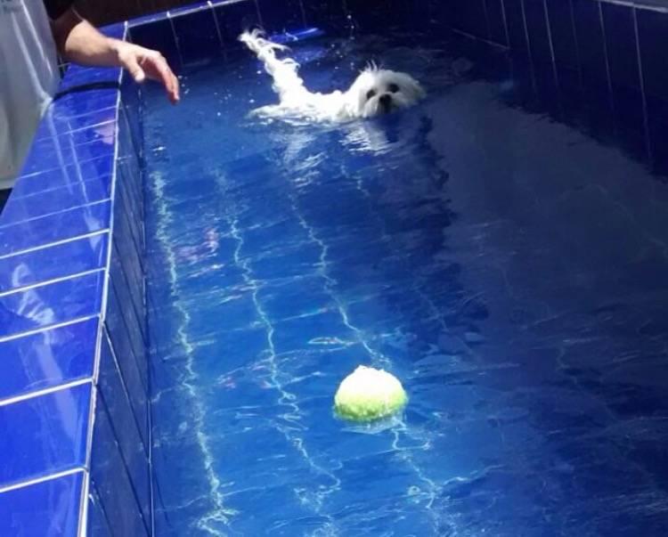 Natação para Cachorros no Aeroporto - Centro de Natação para Cachorro
