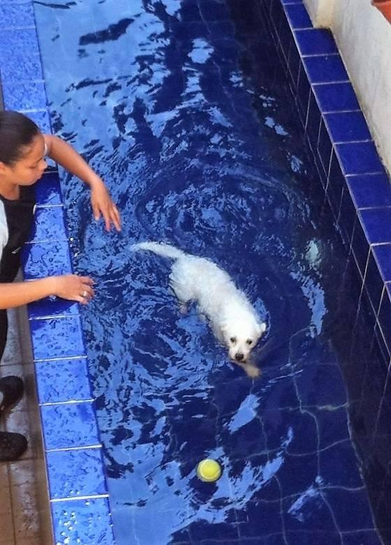 Natação para Cães Preço no Jardim Paulistano - Centro de Natação para Cachorro