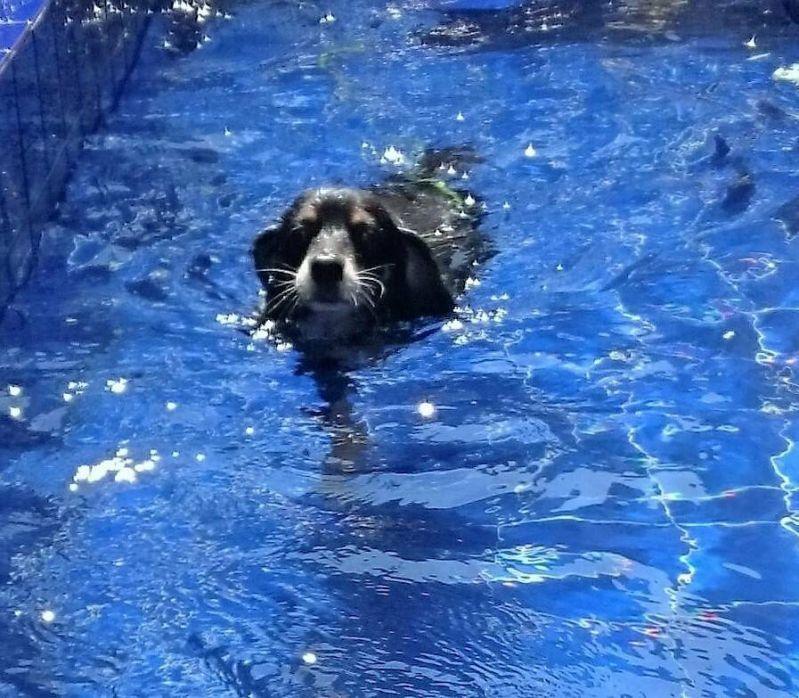 Natação para Cães na Vila Prudente - Centro de Natação para Cachorro