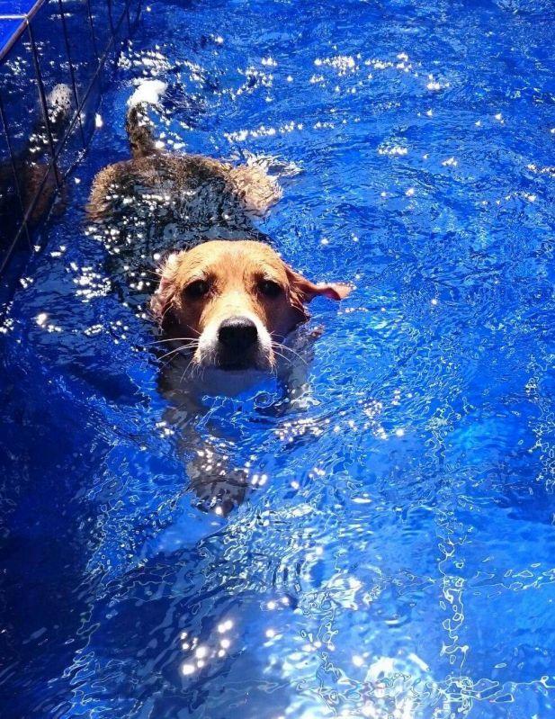 Natação para Cão em José Bonifácio - Centro de Natação para Cachorro