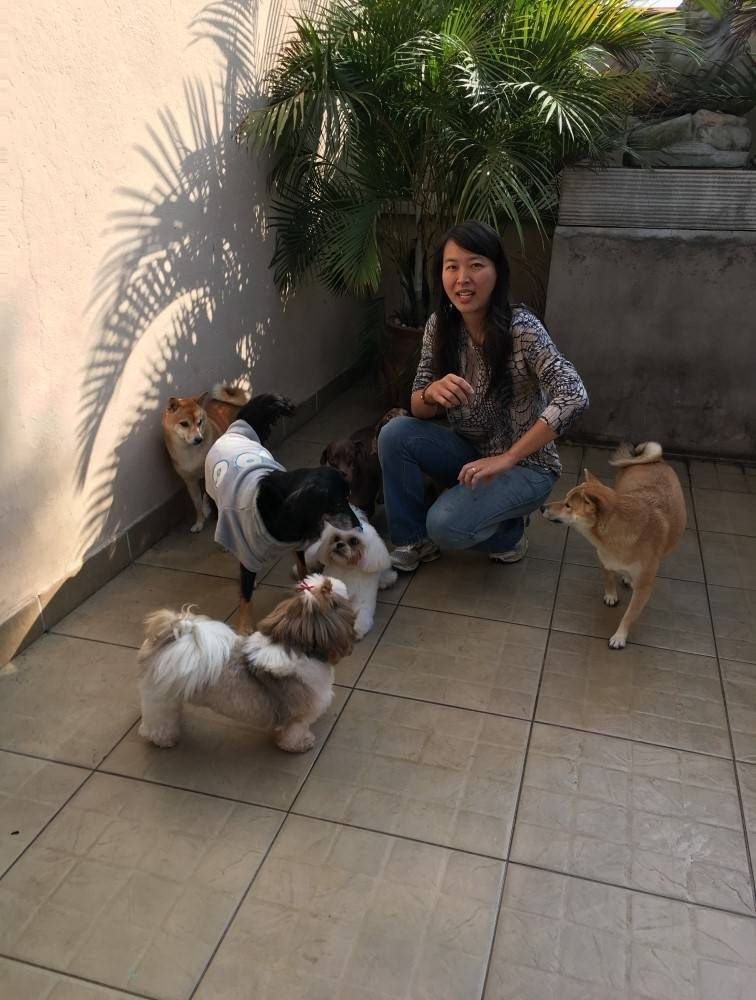 Onde Encontrar Stripping Scottish Terrier no Jardim Iguatemi - Stripping Schnauzer