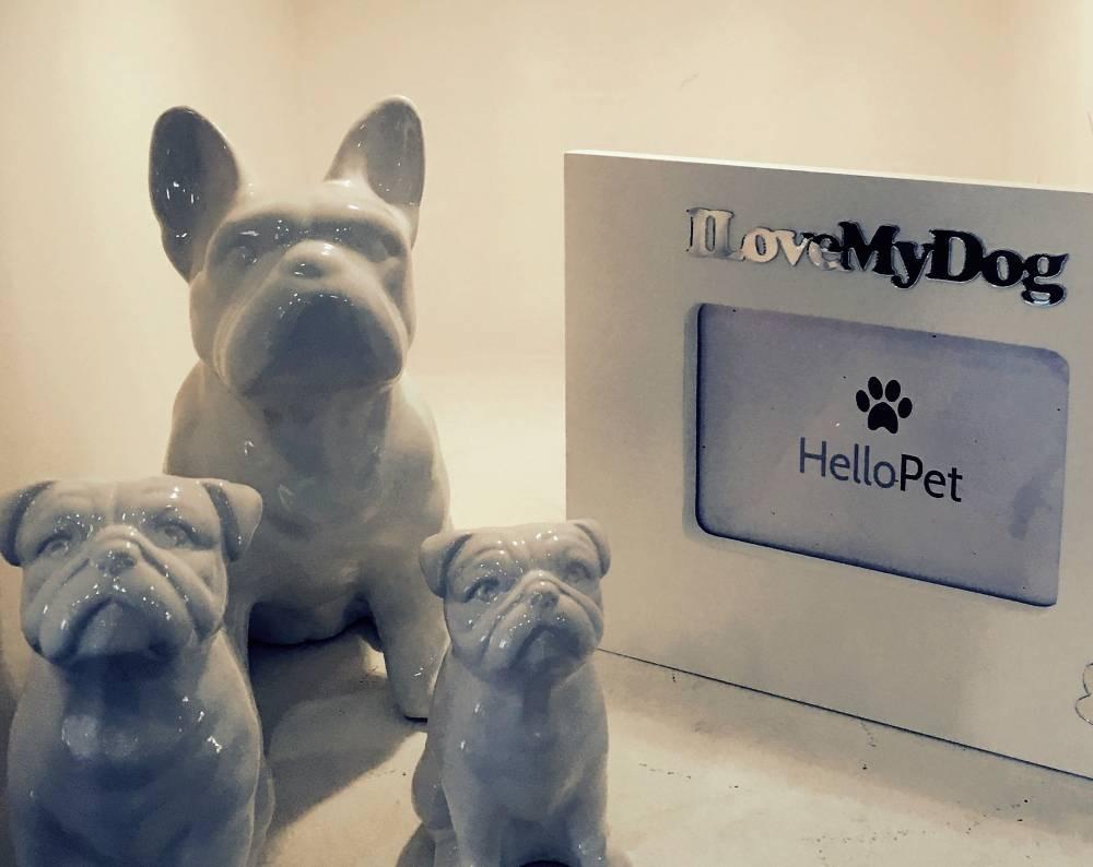 Quanto Custa Boutique para Cães no Centro - Boutique de Luxo para Cachorros